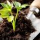 عناصر موجود درخاک و تاثیر آنها بر رشد گیاه