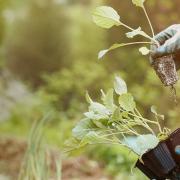 آزمایش خاک کشاورزی